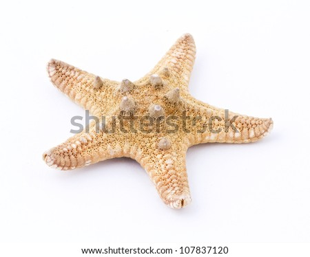 Sea star isolated on white background. Close up - stock photo