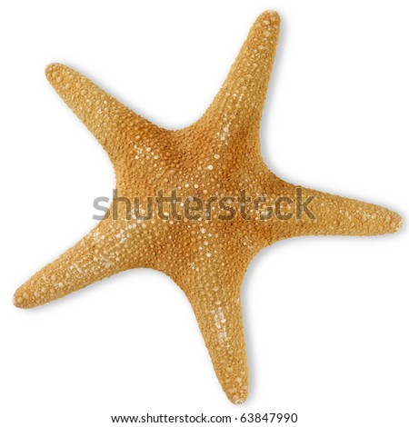 Sea star isolated on white, clipping path included. - stock photo