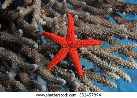 Sea star on coral - stock photo