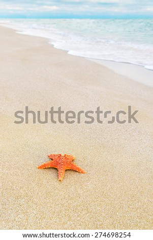 sea-star on sandy tropical beach against waves and cloudy sunset background