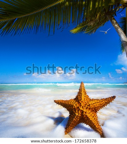 Sea star on the beach  - stock photo
