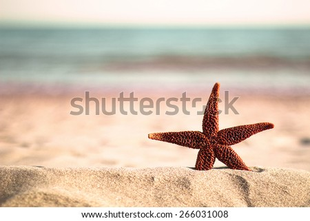 Sea star on the beach shore closeup  - stock photo