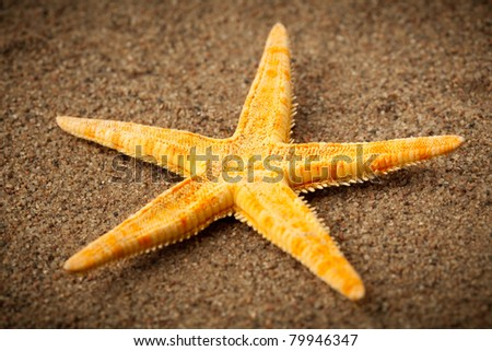 sea star or starfish on the beach - stock photo