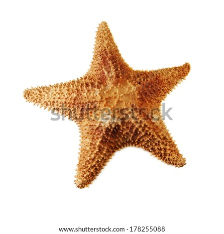 sea starfish isolated on white - stock photo