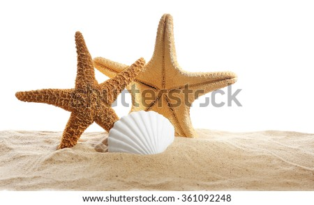 Sea stars and sea shells on sand isolated on white background - stock photo