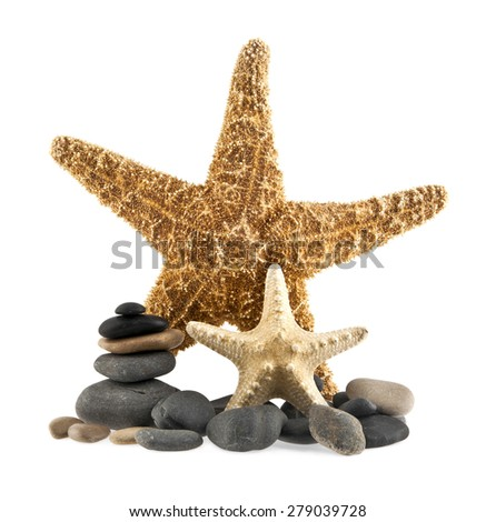 sea stars and stones on white background - stock photo