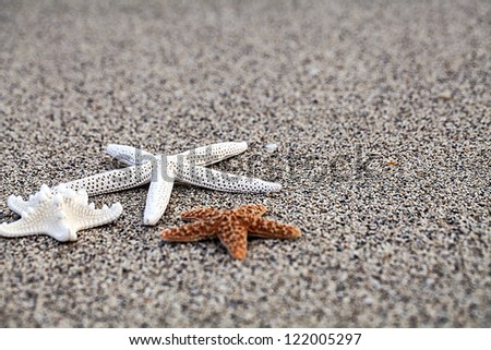 sea stars background