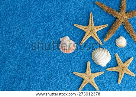 sea stars background  - stock photo