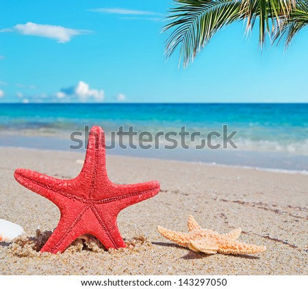sea stars by the shoreline under a palm tree - stock photo