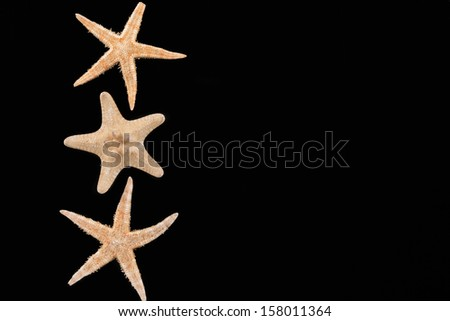Sea stars lie in a row with place for your text - stock photo