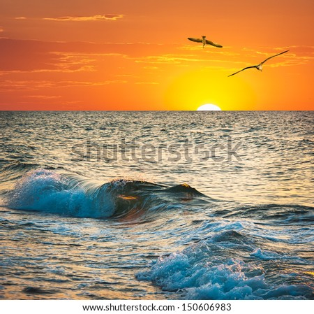 Sea sunset with seagulls. Ocean wave at sundown on the tropical beach.