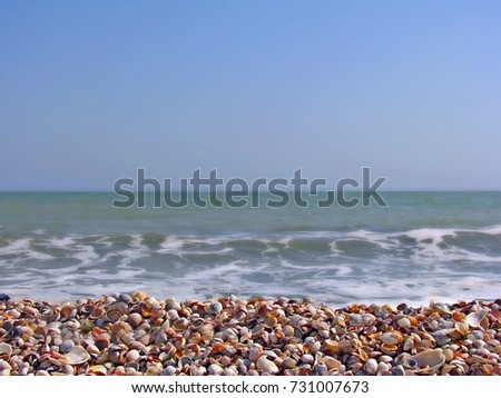 Sea surf with waves and foam and a sea shell on the shore