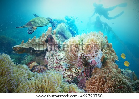 Sea Turtle and  scuba diver with a Coral Reef