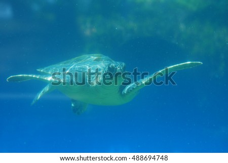 Sea turtle gliding along underwater in the deep blue ocean.