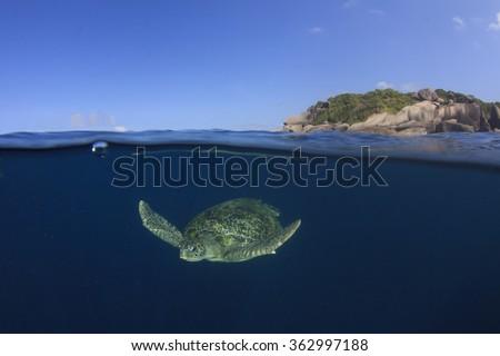 Sea Turtle half and half split photo sea surface underwater and island - stock photo