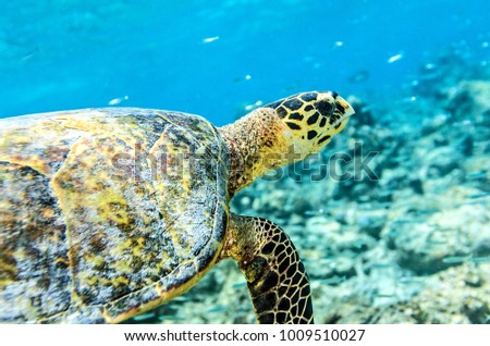 Sea turtle in an ocean