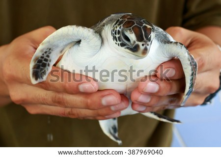 sea turtle in humans hands at Sea Turtles Conservation Research Project in thailand - stock photo
