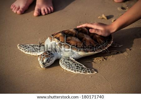Sea Turtle Release - stock photo