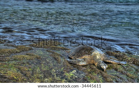 Sea turtle resting on rocks. Pseudo-HDR image created from a single RAW image. - stock photo