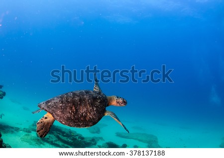 Sea turtle swimming in the reefs of Cabo Pulmo National Park, Cousteau once named it The world's aquarium. Baja California Sur,Mexico.  - stock photo