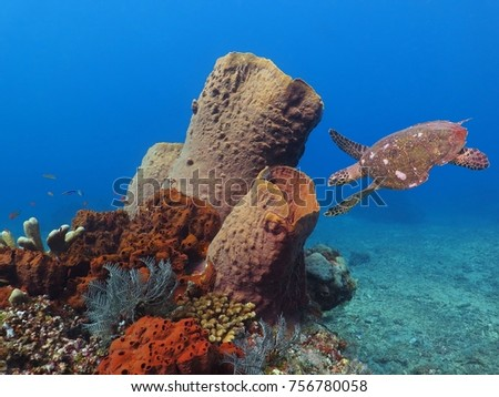 Sea turtle swimming underwater to the giant coral reef sponge. Exotic ocean coral reef with sponge, fish, blue water and turtle. Scuba diving photography above the sea bottom.