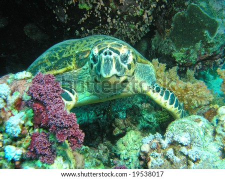 sea turtle undersea