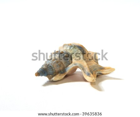 Sea unusual cockleshell on a white background