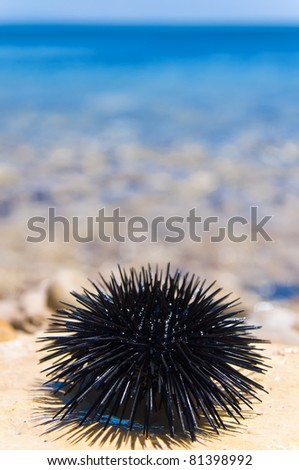 sea urchin on rock with sea background
