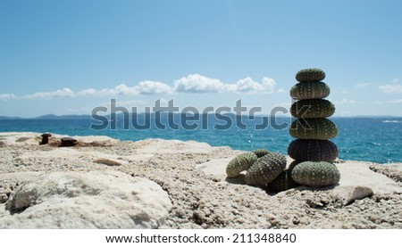 Sea urchin on rock with sea in background  - stock photo