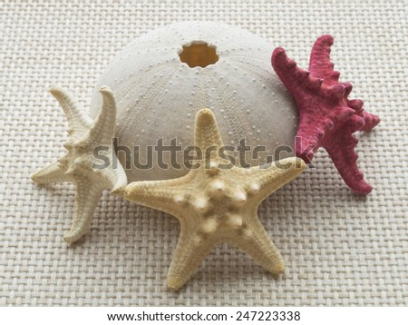Sea urchin skull with three starfishes on the weave fabric close up - stock photo