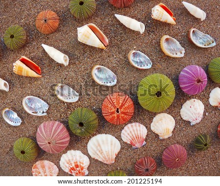 sea urchins and shells on wet sand, natural background - stock photo