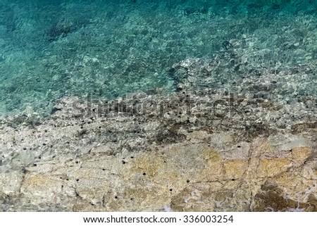 sea urchins at the shoreline - stock photo