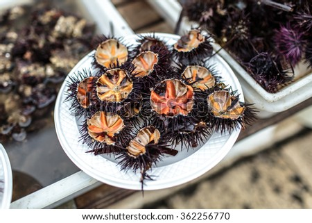 Sea urchins on sale by the fishing harbor in Bari, Puglia region, Italy - stock photo