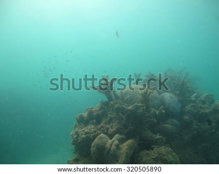 Sea Urchins, Small Spiny Globular Animals, and Coral Reef                 - stock photo