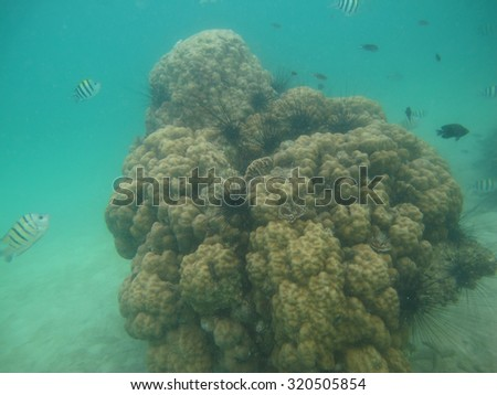 Sea Urchins, Small Spiny Globular Animals, on Coral Reef            - stock photo