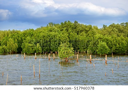 Sea view,nature at seascape,mangrove forest
