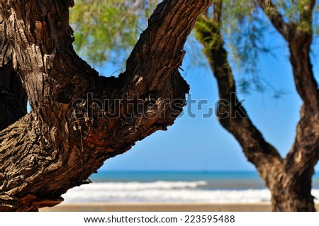 Sea view through the tree branches, blue sky and turquoise blue Mediterranean sea and a little bit of the beach in Mallorca - stock photo