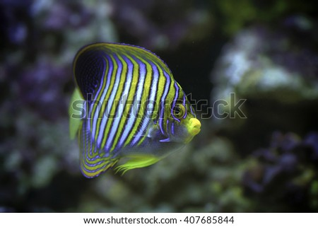 Sea Water Fish