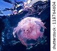 sea water surface and Pink Jellyfish underwater - stock photo