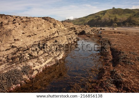 sea weed in rock pool on a reef during low tide at a New Zealand surf beach  - stock photo