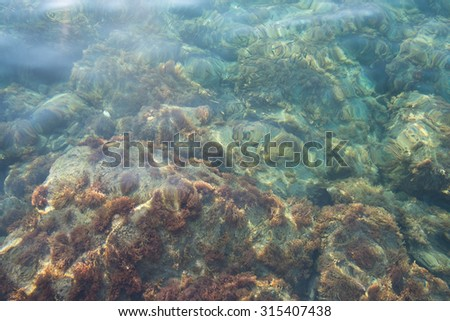 Seabed. Bottom of the sea.  - stock photo