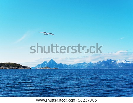 Seabird over North sea - stock photo