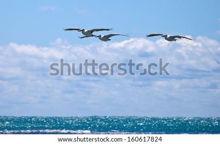Seabirds fly over Penguin Island, west Australia  - stock photo