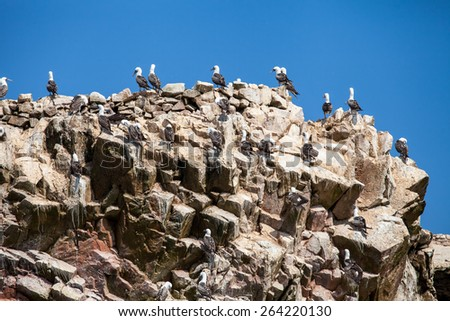 Seabirds on the rockface in the Ballestas island, natural park. Peru - stock photo
