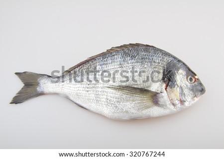 Seabream raw fish - stock photo