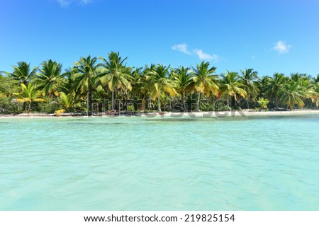 Seacoast with palm trees. - stock photo