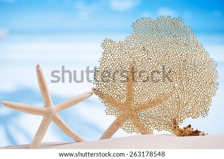 seafan and sea shell with ocean, beach, sky and seascape, shallow dof - stock photo