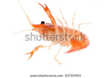 seafood animal crawfish shrimp isolated on white - stock photo