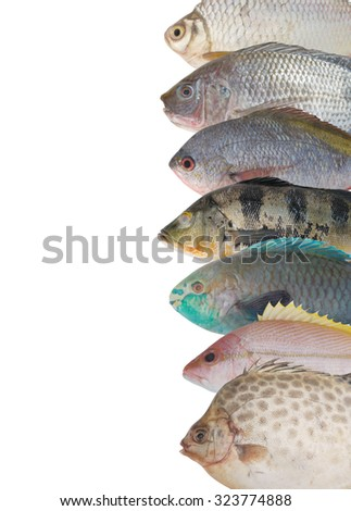 Seafood background, fish collection isolated - stock photo