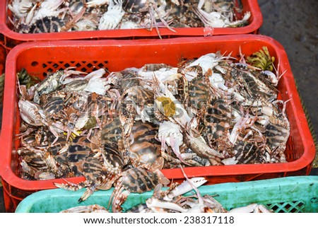 Seafood. crab claws. Fish market in India. collection of Crab on display. Calcium carbonate.  Underside of crabs.Fisheries. - stock photo